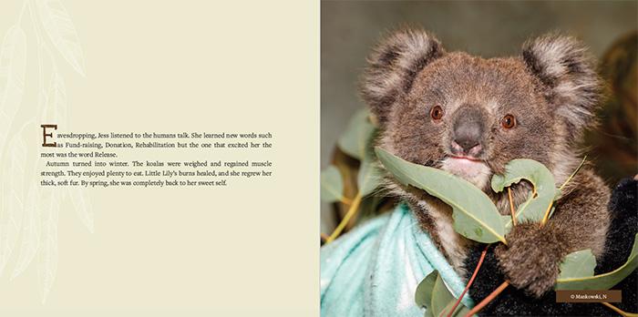 Inside the book - Koala Rescue